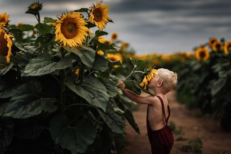 向日葵農場