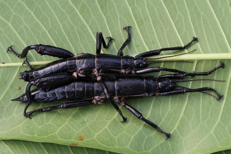 已滅絕的生物有可能重返世間嗎?讓竹節蟲告訴你