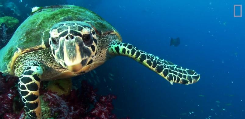 獨家影片:首次發現「發光」海龜
