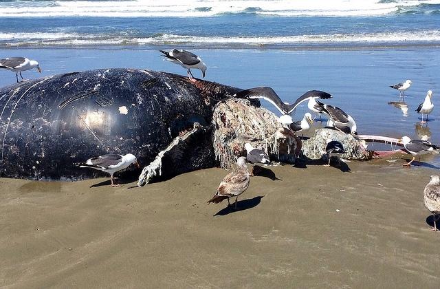 海面掉下來的禮物之深海綠洲──鯨落