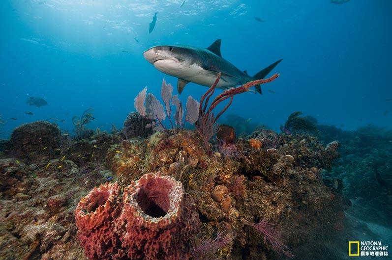 影像藝廊:鯊魚零距離
