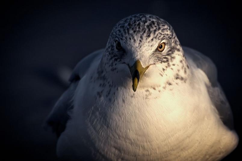 一隻海鷗的心思