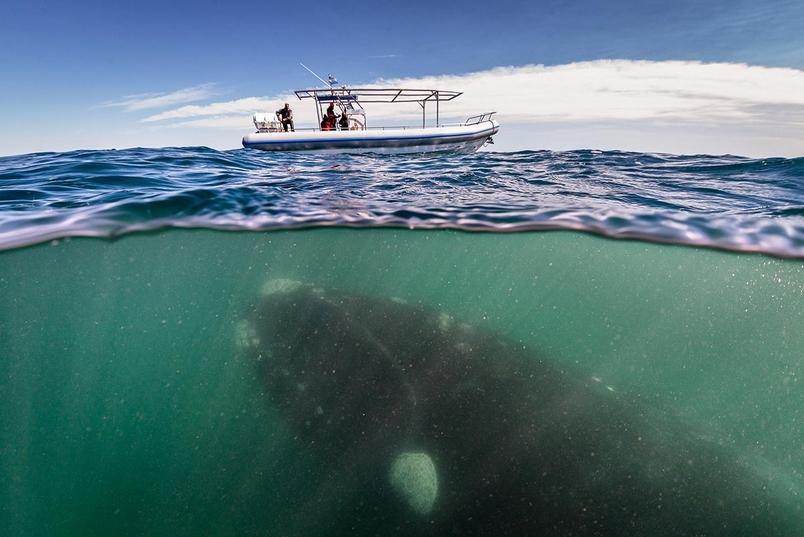 在陸地上奔跑,我們還能叫牠們鯨魚嗎?