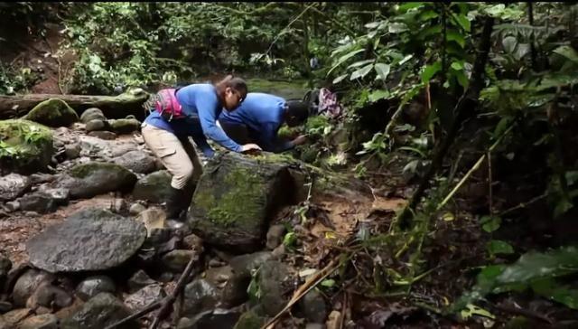 斯維克團隊在哥斯達黎加考察。圖片來源:anoleannals.org