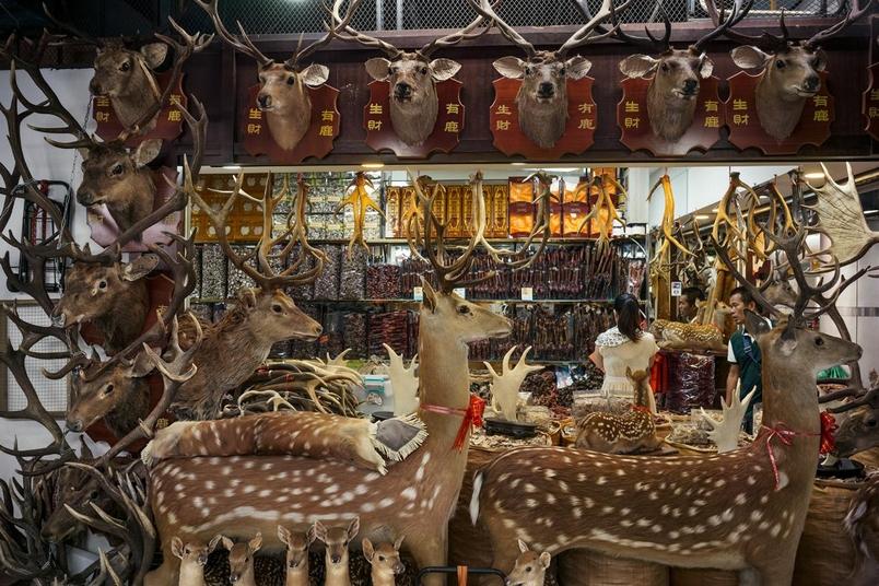 在中國廣州某市場的一間鹿製品專賣店,其內售有鹿茸、鹿鞭及鹿筋等中藥材。PHOTOGRAPH BY FRITZ HOFFMANN