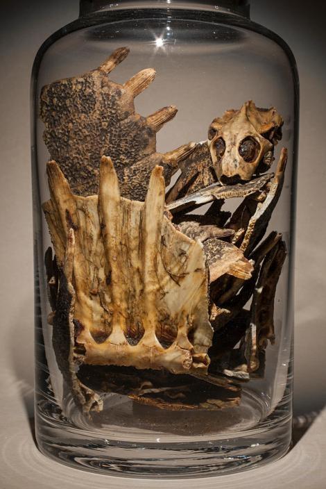 中華鱉養殖除了供應食用之外,其副產品「鱉甲」在中藥中亦有所用。PHOTOGRAPH BY FRITZ HOFFMANN