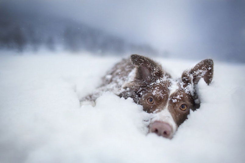 Photograph by Marcin Rutkowski, National Geographic Your Shot