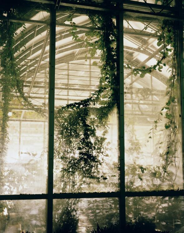 隸屬英國皇家邱植物園(Royal Botanic Gardens, Kew)的千禧年種子庫,有一棟溫室專供現場研究之用。PHOTOGRAPH BY DORNITH DOHERTY
