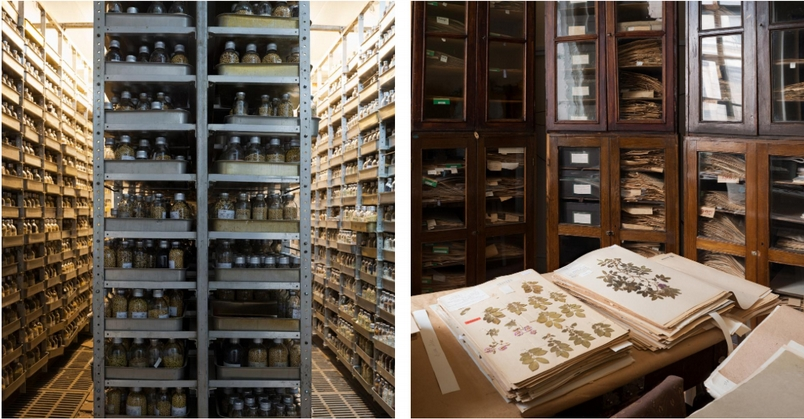 左:俄羅斯的大豆種子國家蒐藏陳列在庫班省庫班實驗站(Kuban Experimental Station)的架子上。 右:俄羅斯的瓦維洛夫種植業研究院(N. I. Vavilov Research Institute of Plant Industry)於1921年在聖彼得堡成立,此處的植物種子蒐藏一度曾是全世界最大、也是最完整的。杜荷提說。第二次世界大戰時,列寧格勒遭圍城長達28個月,「在這裡工作的好幾位植物學家寧願餓死,也不肯吃他們負責守護的種子蒐藏。」 PHOTOGRAPH BY DORNITH DOHERTY