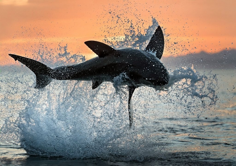 Photograph by Uryadnikov Sergey, National Geographic Your Shot