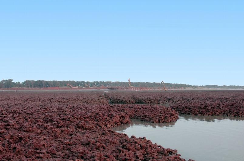 每年3至4月是殼狀珊瑚藻生長最旺盛的時候,那時原本烏黑的礁岩就會轉為紅通通一片。照片後方可見到開方中的工地。Photograph courtesy of Mission Blue