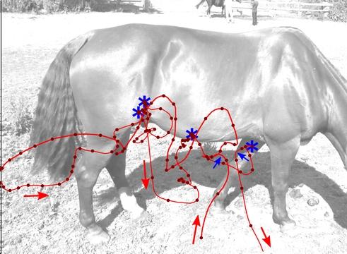 純色棕馬周圍的馬蠅飛行路線 | Martin How