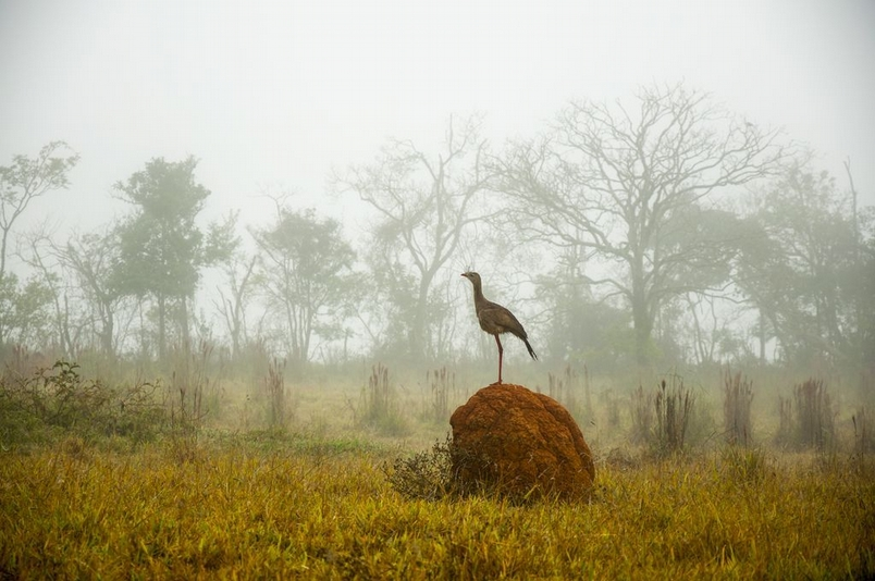 Photograph by Ricardo Breda, National Geographic Your Shot