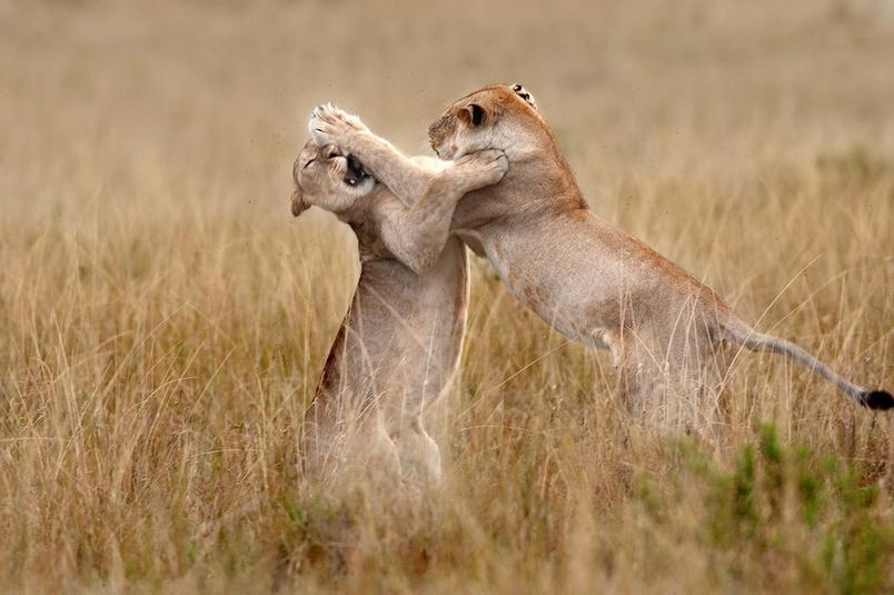 Photograph by Rakesh Dhareshwar, National Geographic Your Shot