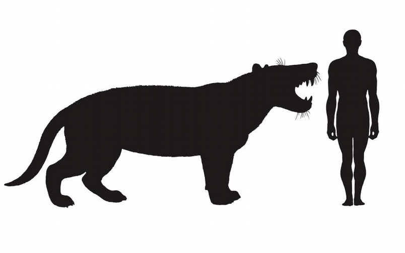 插圖畫出現代人和巨獅鬣獸的體型比較。ILLUSTRATION BY MAURICIO ANTON