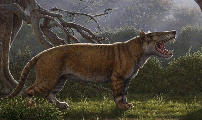 巨獅鬣獸(<i>Simbakubwa kutokaafrika</i>)是一種巨大的肉食動物,屬於已滅絕的鬣齒獸(hyaenodont)類群,目前對牠的了解來自肯亞發現的大部分顎骨、一部分顱骨,與一些其他部位的骨骸。ILLUSTRATION BY MAURICIO ANTON