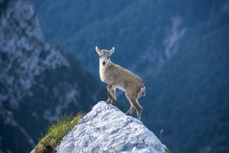 Photograph by  Gregor Skoberne, National Geographic Your Shot