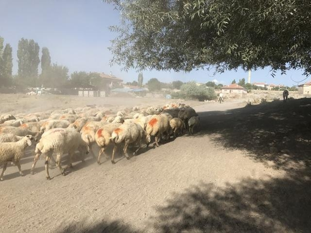 遺址附近的羊群| 參考文獻1