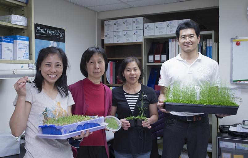 李秀敏與她的研究團隊,由左到右為朱瓊枝、李秀敏、陳麗貞、陳奕霖。他們手上拿的就是本次研究的主角:阿拉伯芥和豌豆。 攝影│林洵安