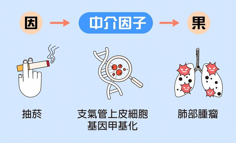 「因果中介模型」在於找出因和果「中間」發生什麼事。例如:抽菸到肺部產生腫瘤的過程中,是因為香菸所含物質,導致細胞基因發生甲基化。 資料來源│黃彥棕    圖說設計│林婷嫻、林洵安