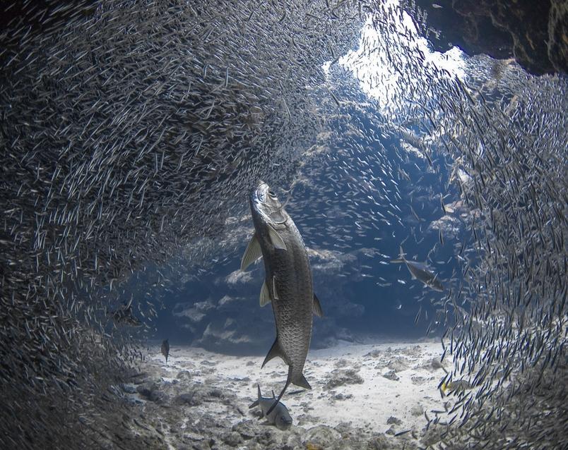 Photograph by Jason Washington, National Geographic Your Shot