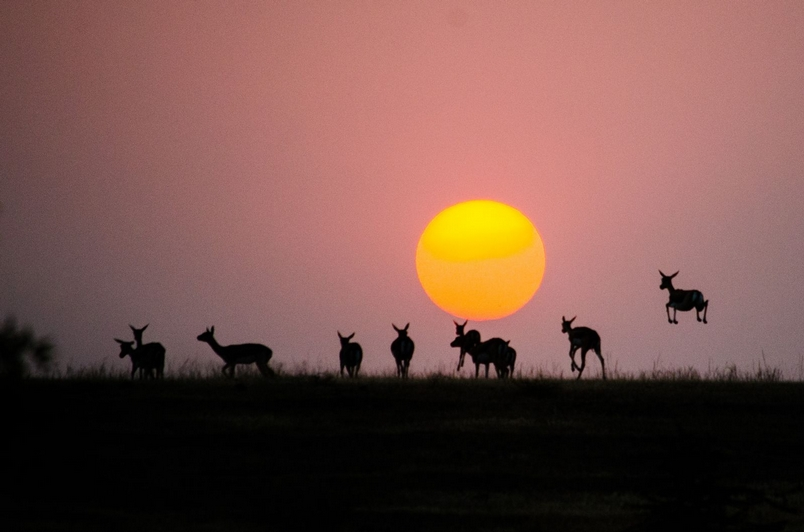 Photograph by Yuvraj Navle, National Geographic Your Shot