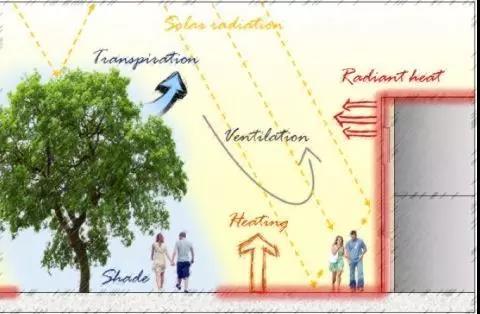 影響人體白天熱舒適的關鍵環境因素。圖片來源:Trees for a Cool City: Guidelines for Optimised Tree Placement