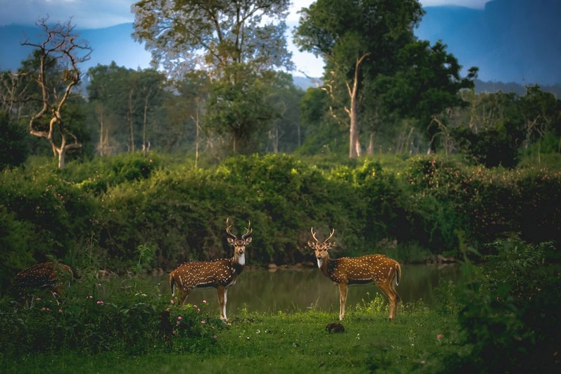 Photograph by Alvis Lazarus, National Geographic Your Shot