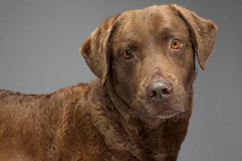人類在許多方面影響了狗狗的演化,包括牠們的腦袋是如何建構的。PHOTOGRAPH BY ROBERT CLARK, NAT GEO IMAGE COLLECTION