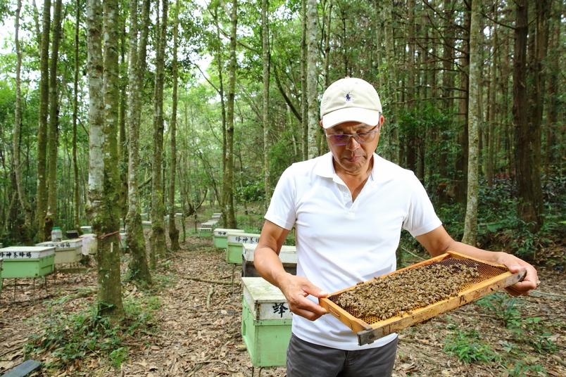 放置在林試所蓮華池分所這片印度栲試驗林下方的蜂箱,按照蜜蜂的生命週期,每一個星期都需要檢視照顧。王智聰說,林下養蜂在碰到森林中開花的植物較少的季節時,若不餵食,蜂群就會劣化,蜜蜂數量減少,這是他對照實驗後的結果,證實了林下養蜂並非放著就有源源不絕的蜂蜜可以採收。他則是選擇在開花淡季時不採蜜,為蜜蜂留下存糧。(攝影:陳郁文)