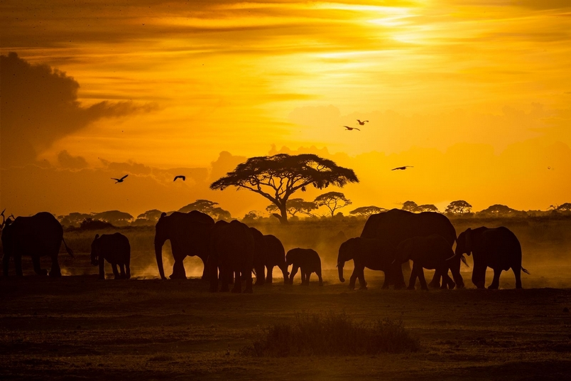 Photograph by Susan Schmitz, National Geographic Your Shot
