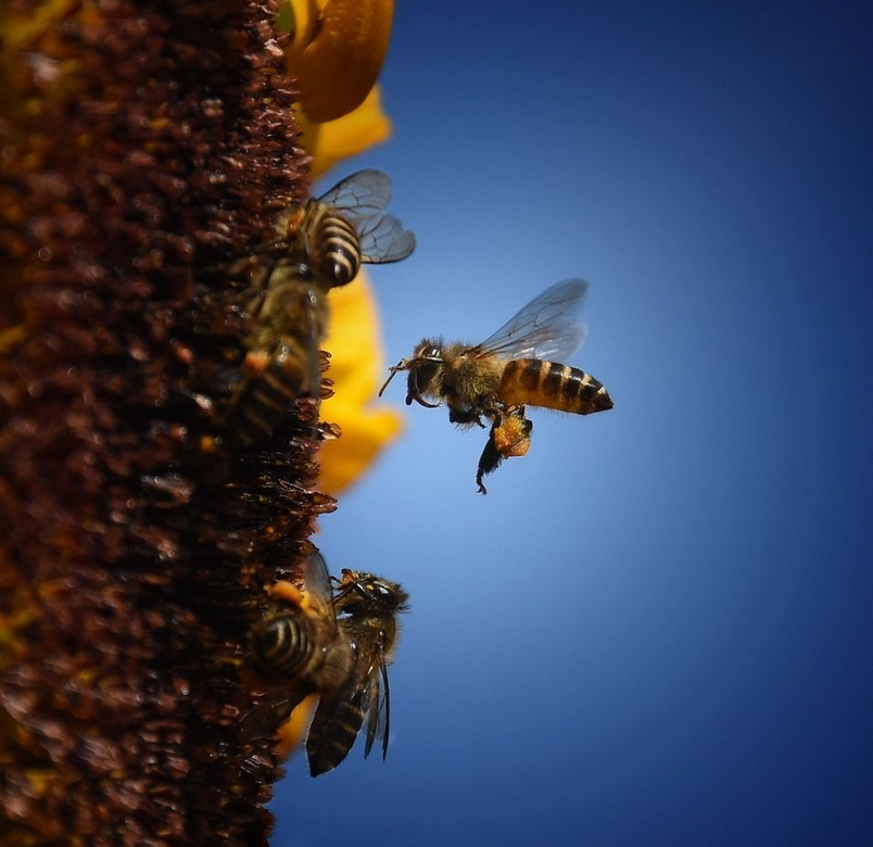Photograph by ABHISHEK S KUMAR, National Geographic Your Shot