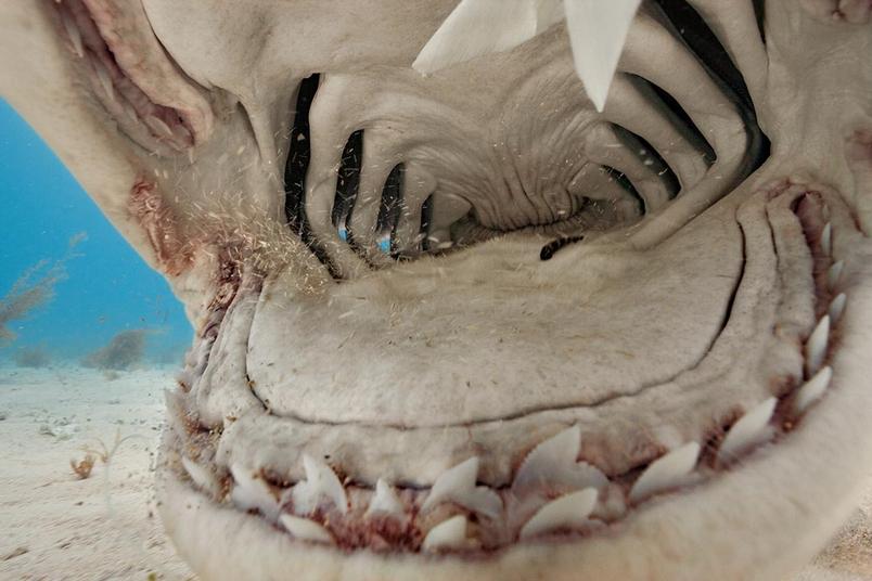 鯊魚零距離