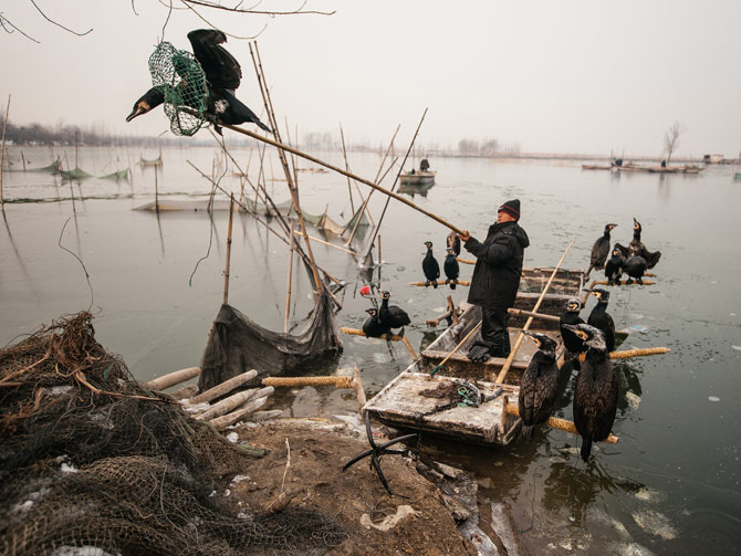 02-fisherman-loads-cormorants-onto-boat-670