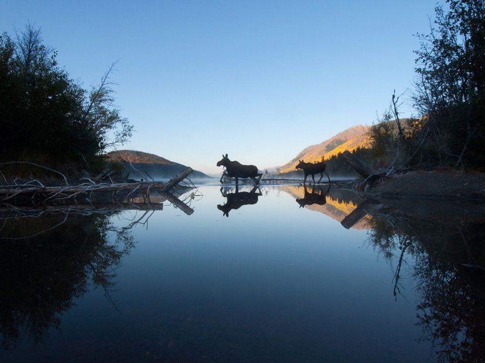 moose-lake-canada_69223_990x742