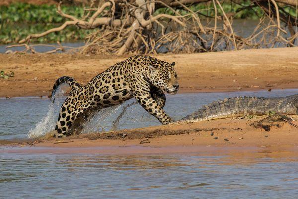 news0924-jaguar03