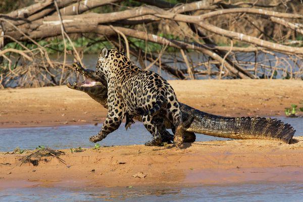 news0924-jaguar06