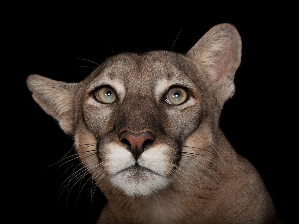 panther-zoo-florida-sartore_72061_990x742