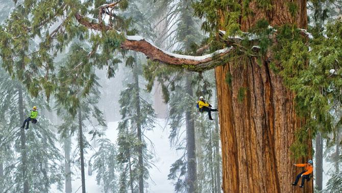 01-sequoia-climbing-team-670