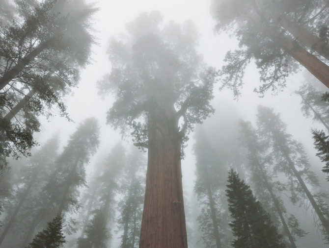 02-general-sherman-living-tree-670
