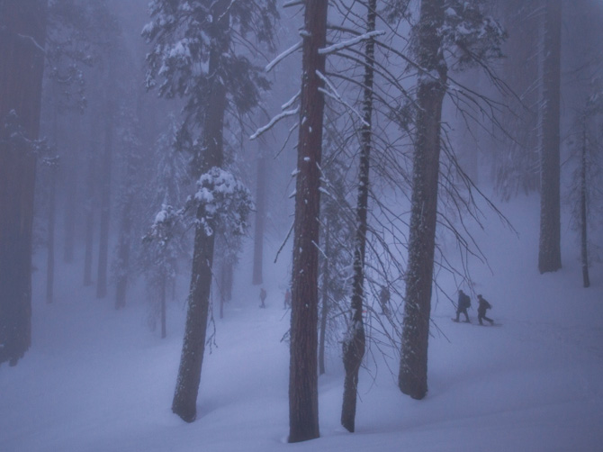 05-sequoias-withstand-winter-snow-weight-670