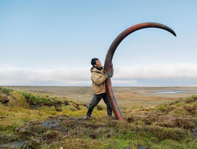 01-pristine-mammoth-tusk-670