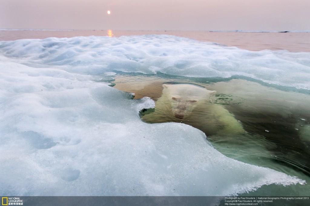「2013國家地理攝影大賽」最大獎暨自然類首獎作品「冰熊」(Ice Bear)。破紀錄的炎熱氣候中,一隻北極熊從哈德遜灣消融中的海冰底下往上窺看,午夜時分的落日在遠方大火煙霧的映照下煥發紅色光芒。加拿大曼尼托巴省是全球最南的北極熊分布區,這裡的北極熊特別受到氣候暖化與海冰減少的威脅。攝影師:保羅‧索德斯