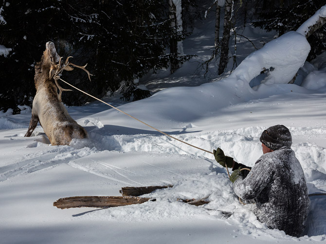 03-lassoing-elk-hunting-670