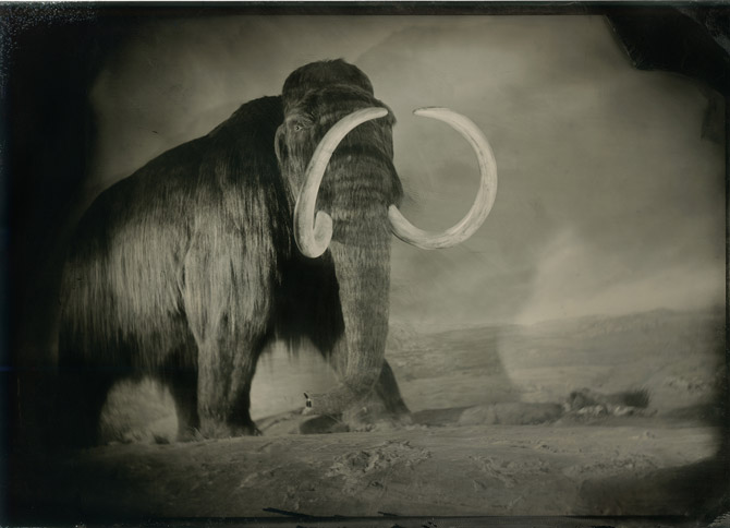 04-wolly-mammoth-670