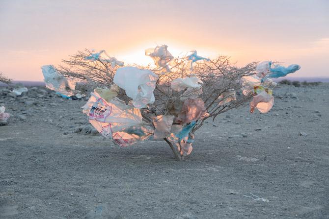 15-plastic-trash-acacia-670f