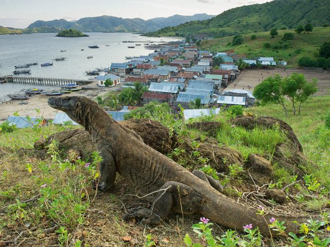 02-adult-dragon-hangs-near-kodomo-village