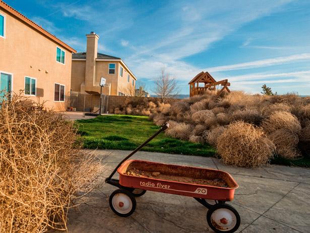 tumbleweeds-pile-up-in-yard-615