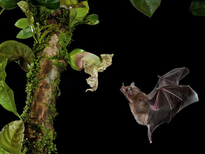 01-nectar-bat-and-flower-670