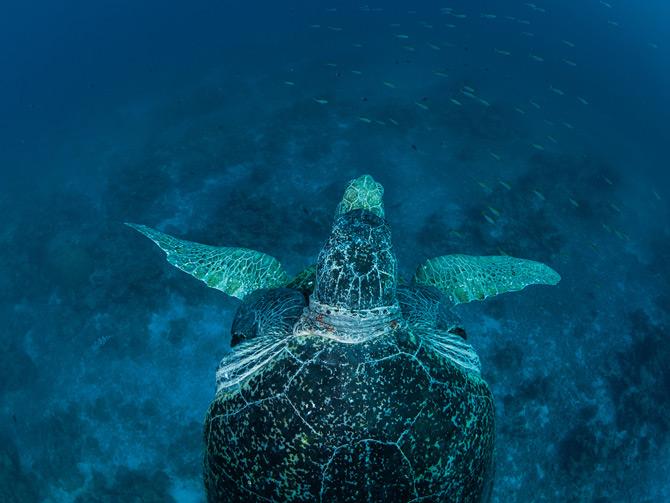 01-mozambique-atoll-sea-turtle-670
